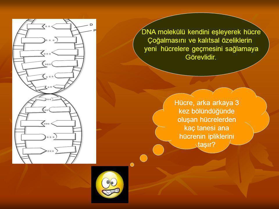DNA molekülü kendini eşleyerek hücre