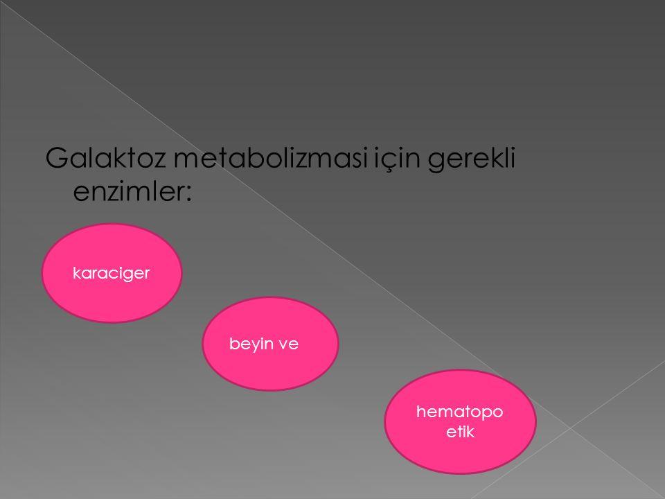 Galaktoz metabolizmasi için gerekli enzimler: