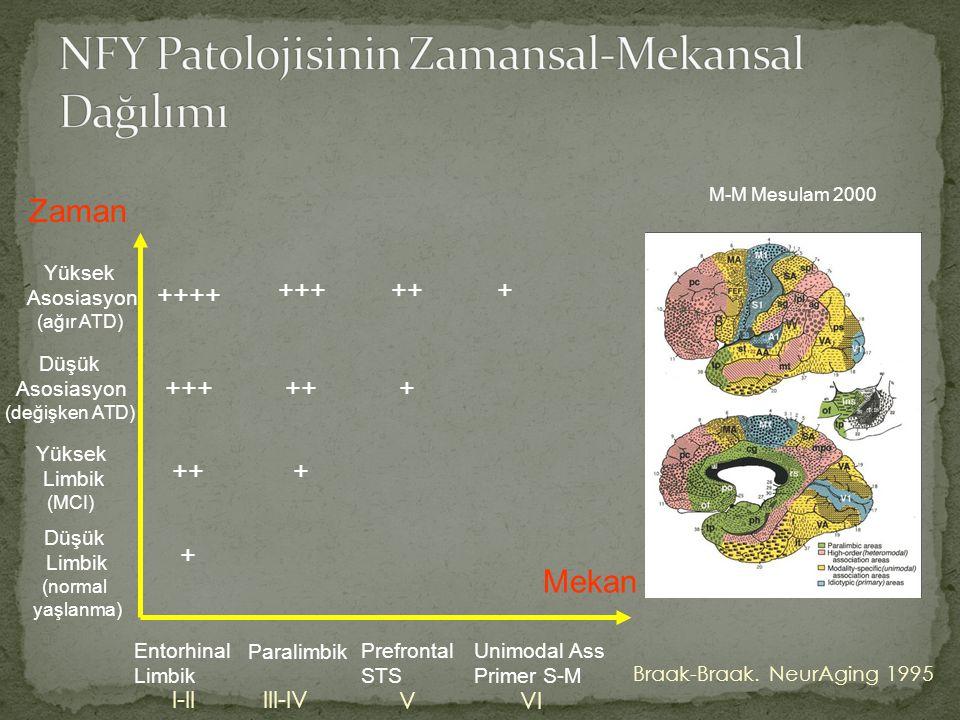 NFY Patolojisinin Zamansal-Mekansal Dağılımı