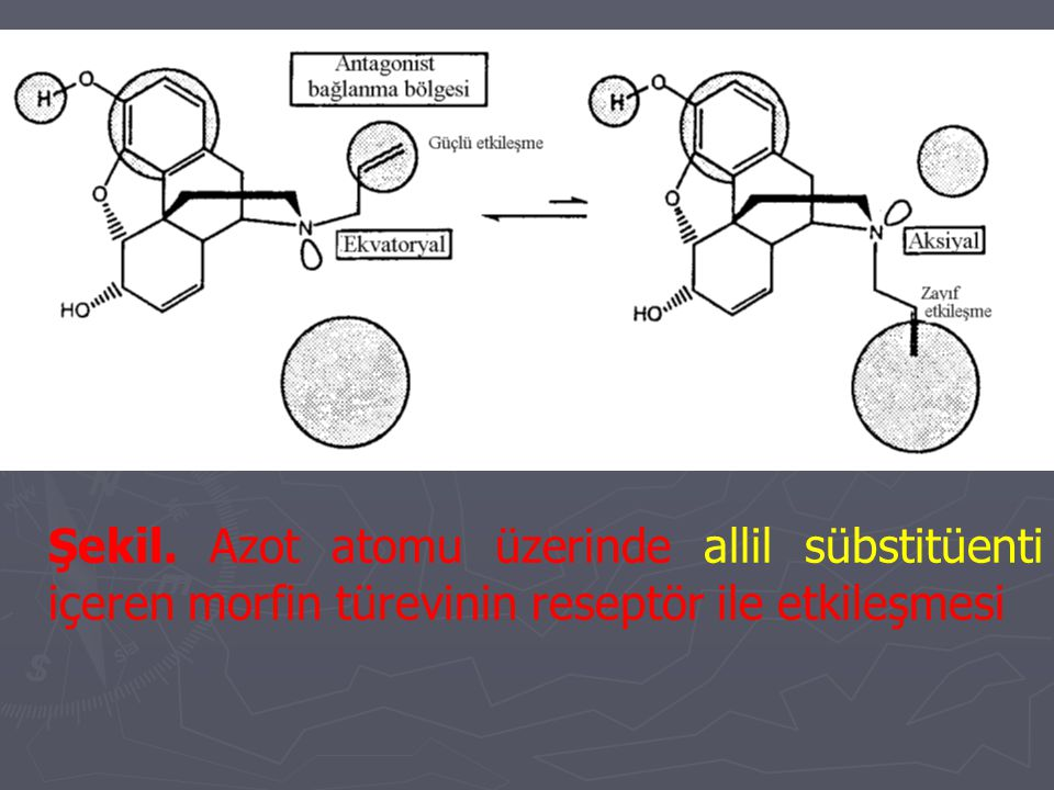 Şekil. Azot atomu üzerinde allil sübstitüenti içeren morfin türevinin reseptör ile etkileşmesi
