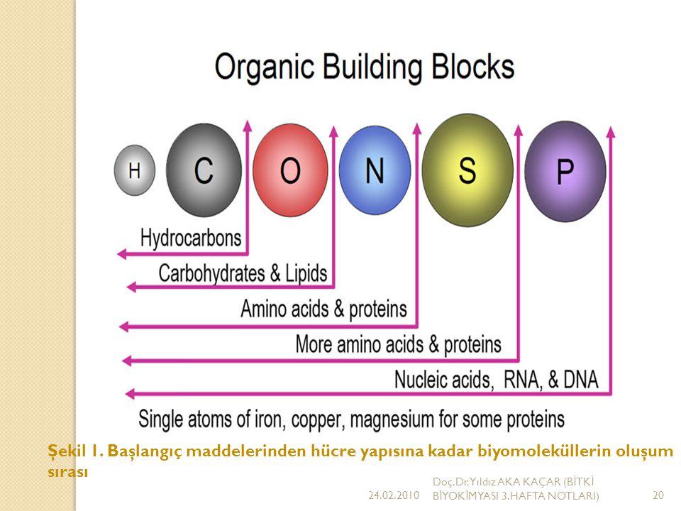 Şekil 1. Başlangıç maddelerinden hücre yapısına kadar biyomoleküllerin oluşum sırası