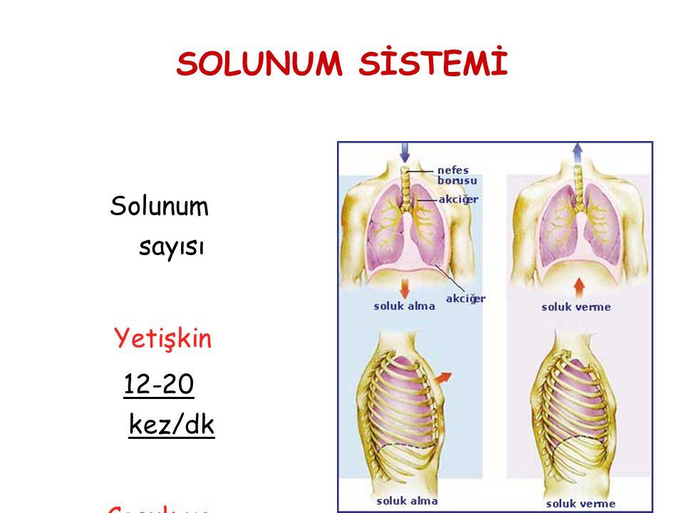 SOLUNUM SİSTEMİ Solunum sayısı Yetişkin 12-20 kez/dk Çocuk ve bebek