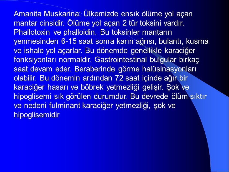 Amanita Muskarina: Ülkemizde ensık ölüme yol açan mantar cinsidir