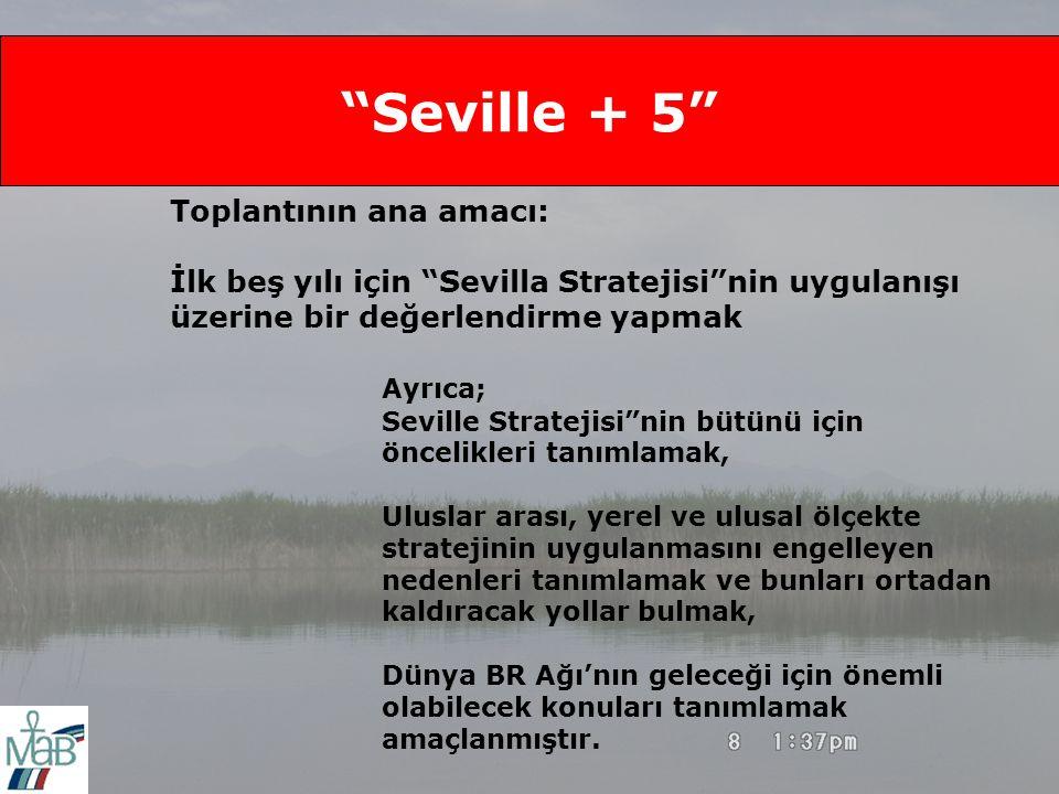 Seville + 5