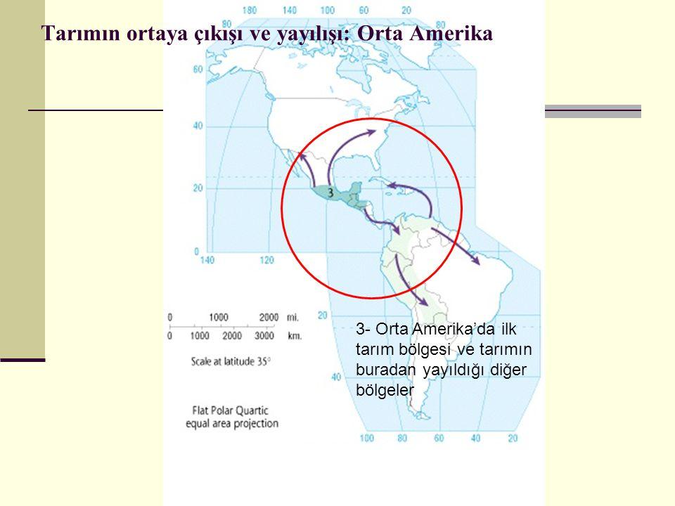 Tarımın ortaya çıkışı ve yayılışı: Orta Amerika