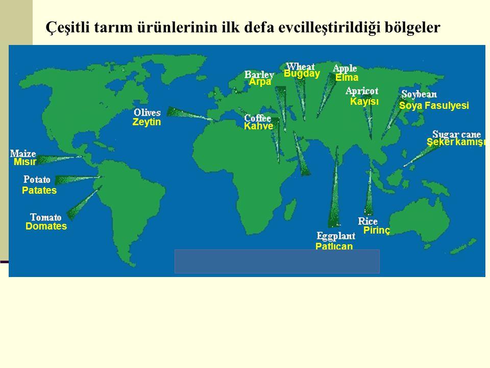 Çeşitli tarım ürünlerinin ilk defa evcilleştirildiği bölgeler