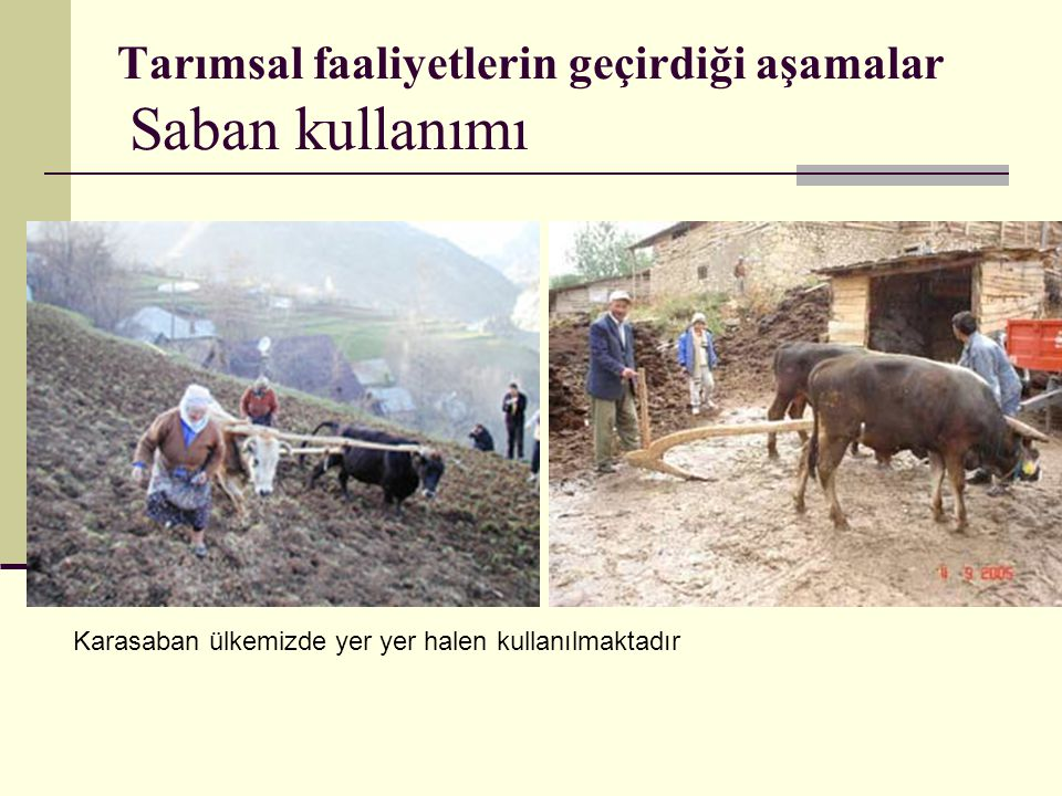 Tarımsal faaliyetlerin geçirdiği aşamalar Saban kullanımı