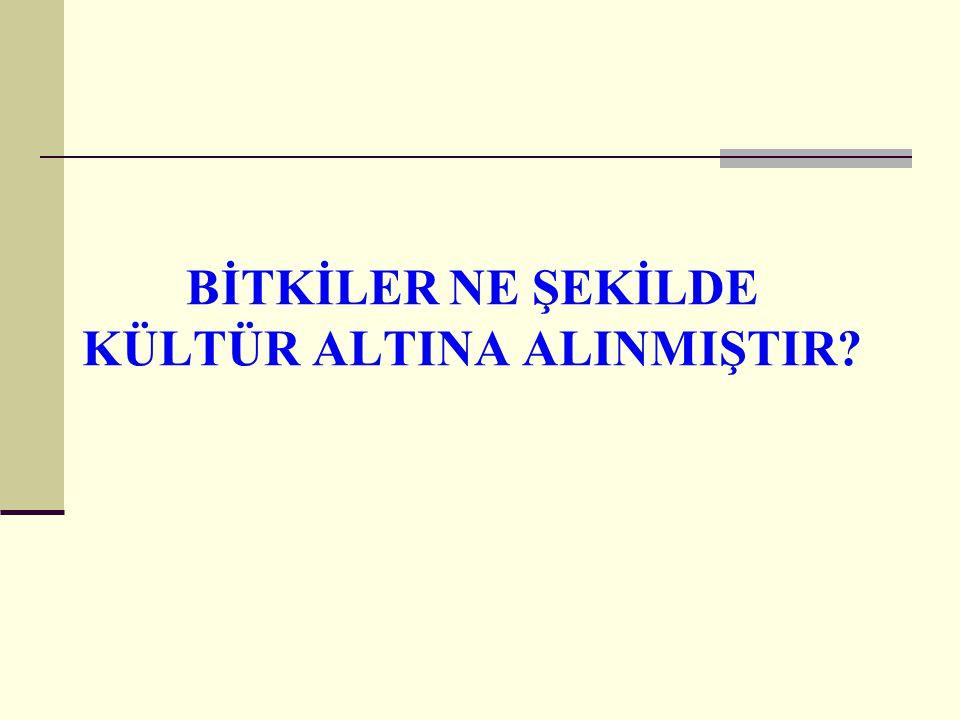 BİTKİLER NE ŞEKİLDE KÜLTÜR ALTINA ALINMIŞTIR