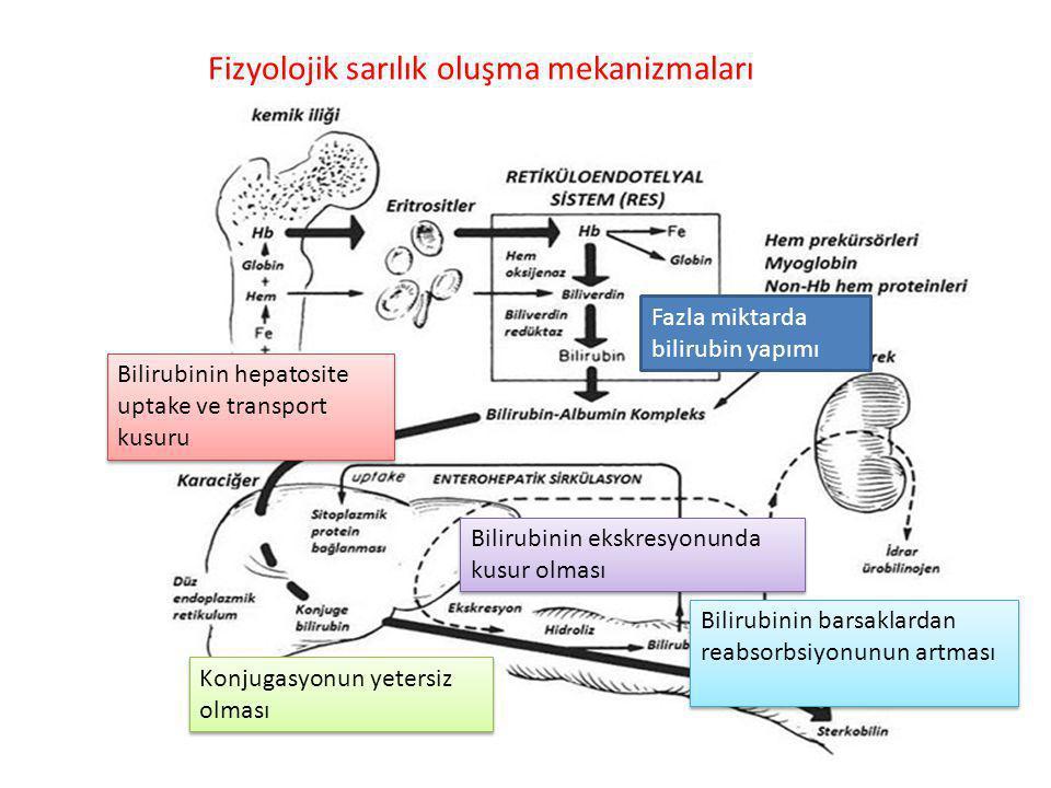 Fizyolojik sarılık oluşma mekanizmaları