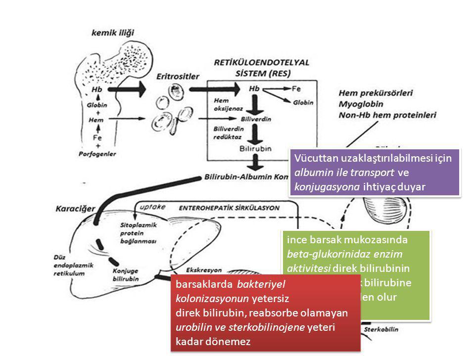 Vücuttan uzaklaştırılabilmesi için albumin ile transport ve konjugasyona ihtiyaç duyar