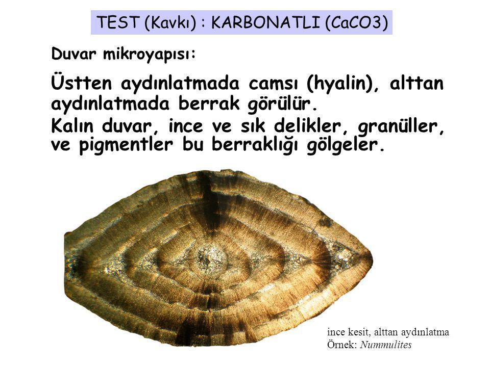 TEST (Kavkı) : KARBONATLI (CaCO3)