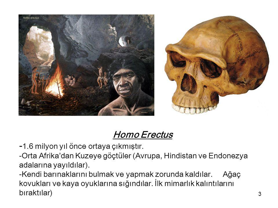 Homo Erectus -1. 6 milyon yıl önce ortaya çıkmıştır