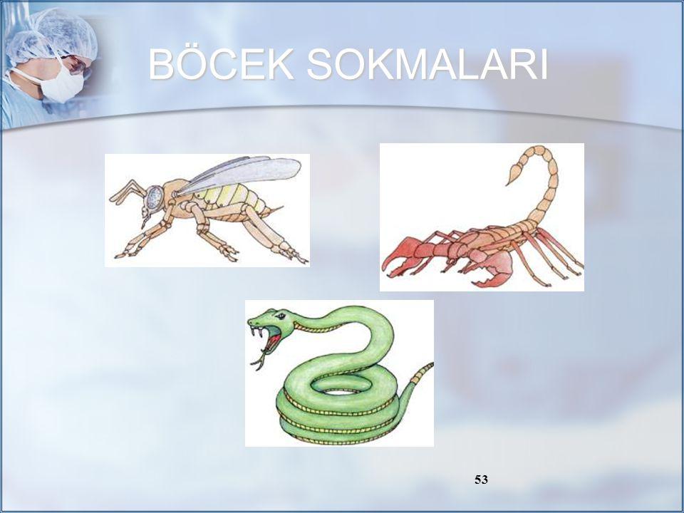 BÖCEK SOKMALARI / 58