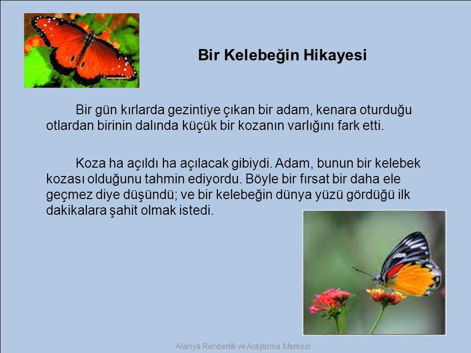 Bir Kelebeğin Hikayesi