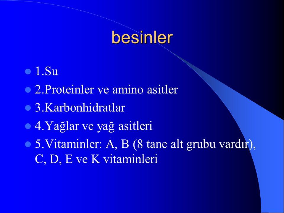 besinler 1.Su 2.Proteinler ve amino asitler 3.Karbonhidratlar