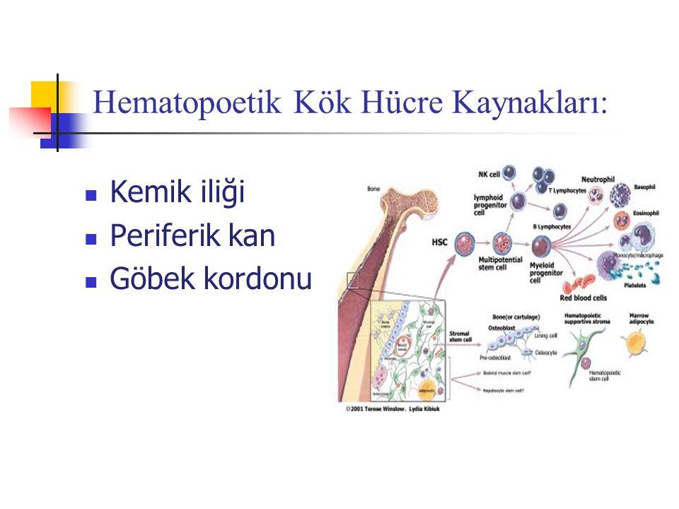 Hematopoetik Kök Hücre Kaynakları: