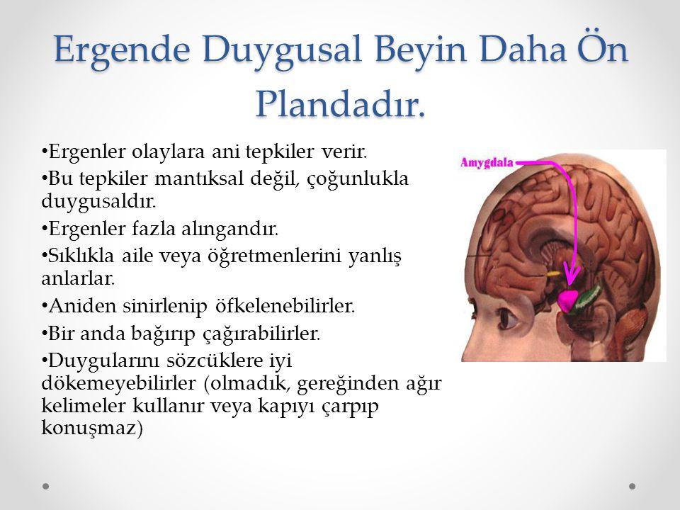 Ergende Duygusal Beyin Daha Ön Plandadır.
