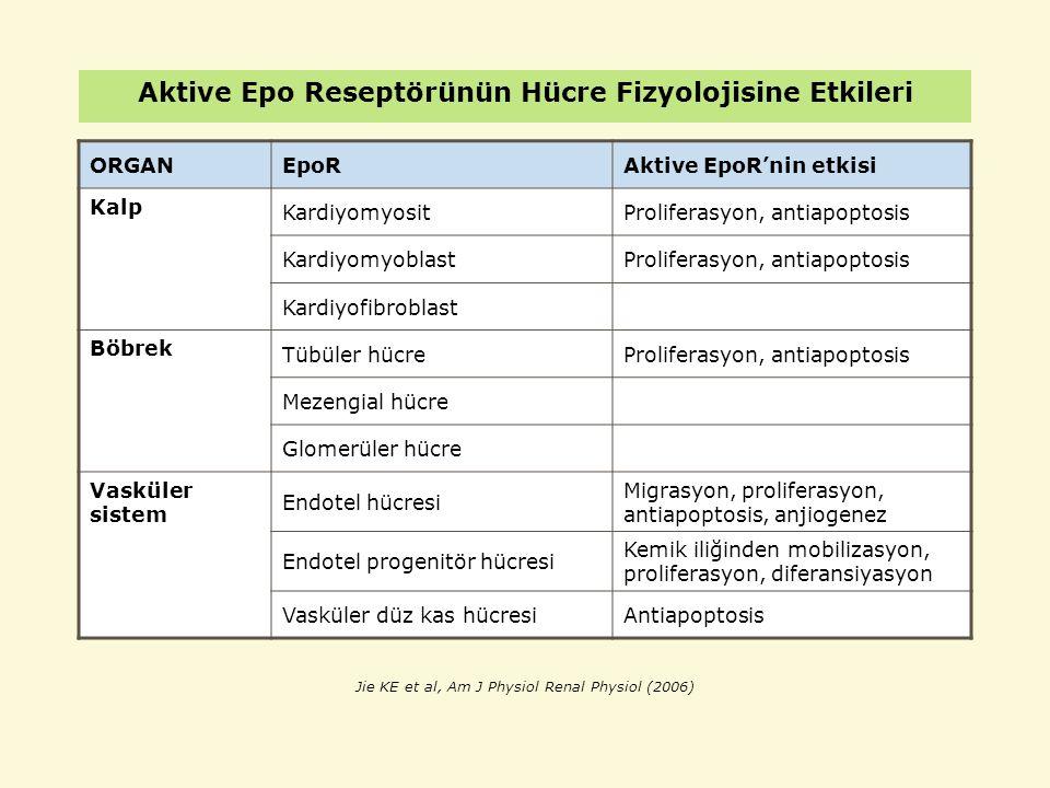 Aktive Epo Reseptörünün Hücre Fizyolojisine Etkileri