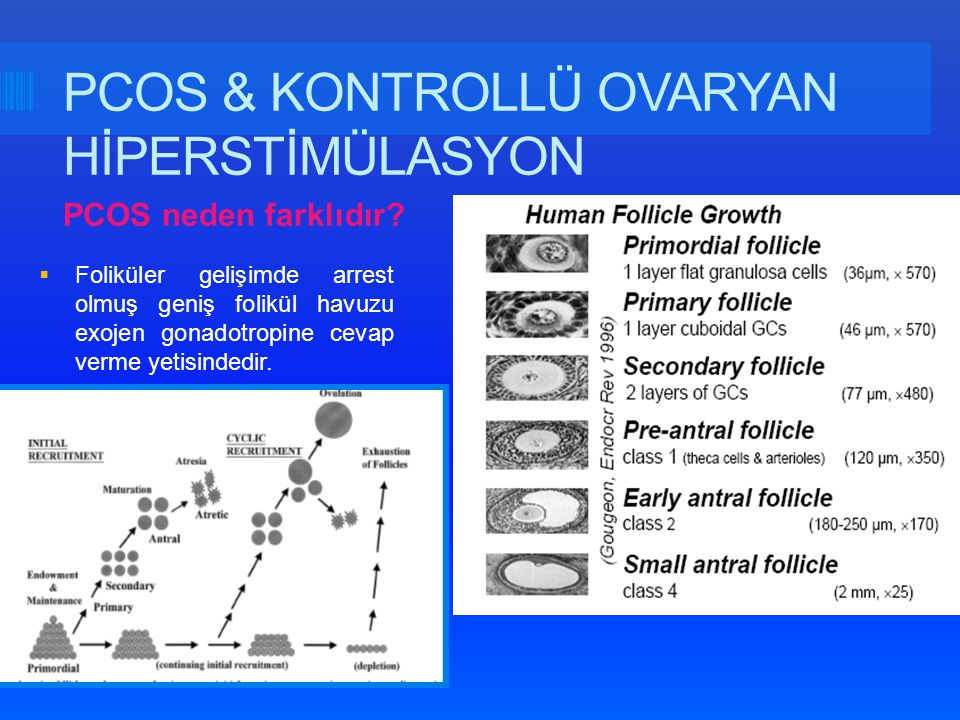 PCOS & KONTROLLÜ OVARYAN HİPERSTİMÜLASYON