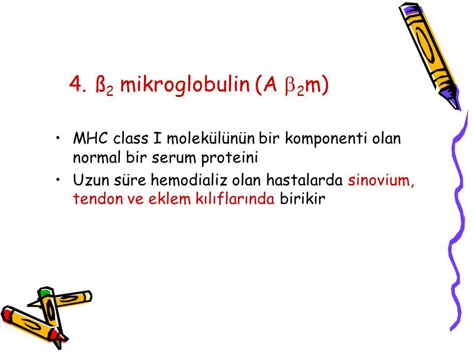 4. ß2 mikroglobulin (A 2m) MHC class I molekülünün bir komponenti olan normal bir serum proteini.
