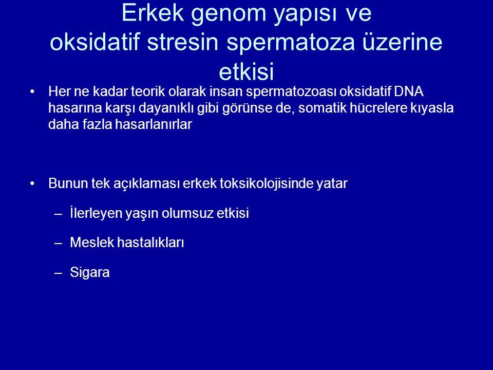 Erkek genom yapısı ve oksidatif stresin spermatoza üzerine etkisi