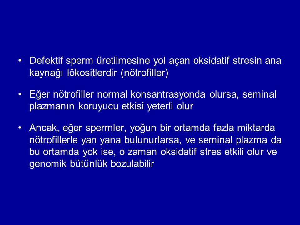 Defektif sperm üretilmesine yol açan oksidatif stresin ana kaynağı lökositlerdir (nötrofiller)