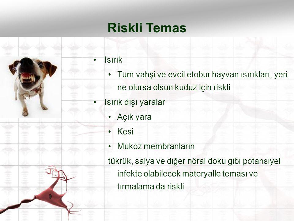 Riskli Temas Isırık. Tüm vahşi ve evcil etobur hayvan ısırıkları, yeri ne olursa olsun kuduz için riskli.
