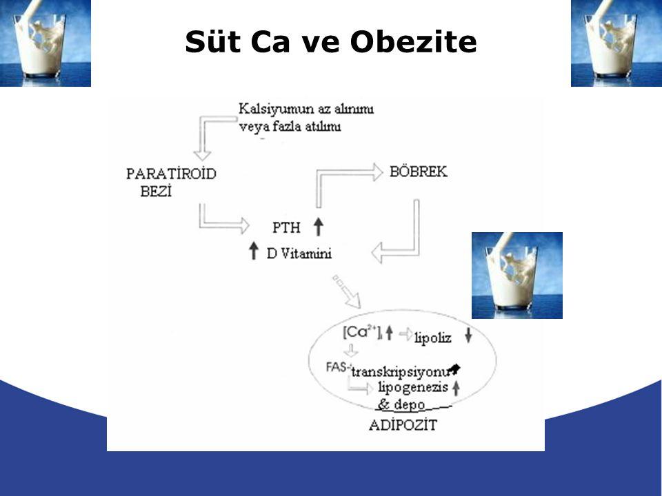 Süt Ca ve Obezite