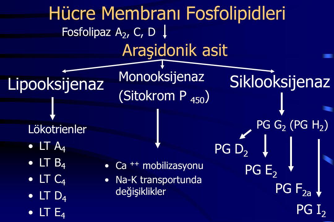 Hücre Membranı Fosfolipidleri