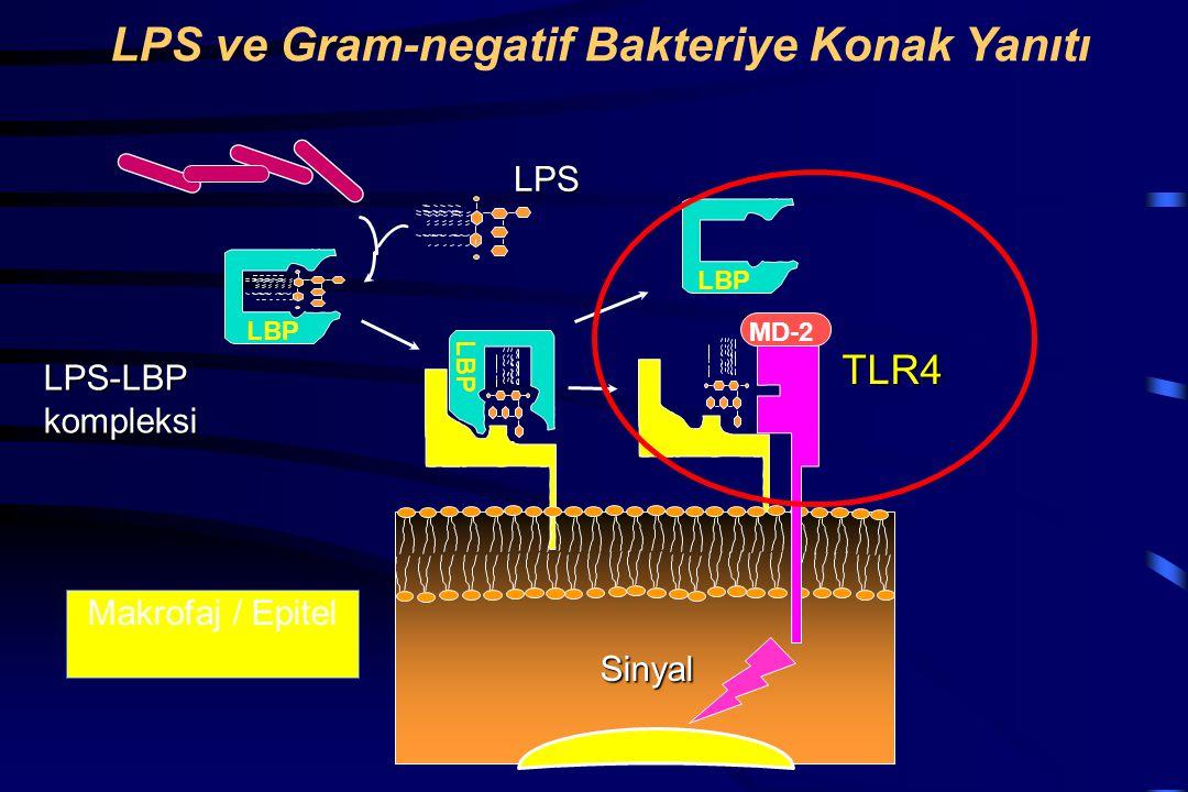LPS ve Gram-negatif Bakteriye Konak Yanıtı