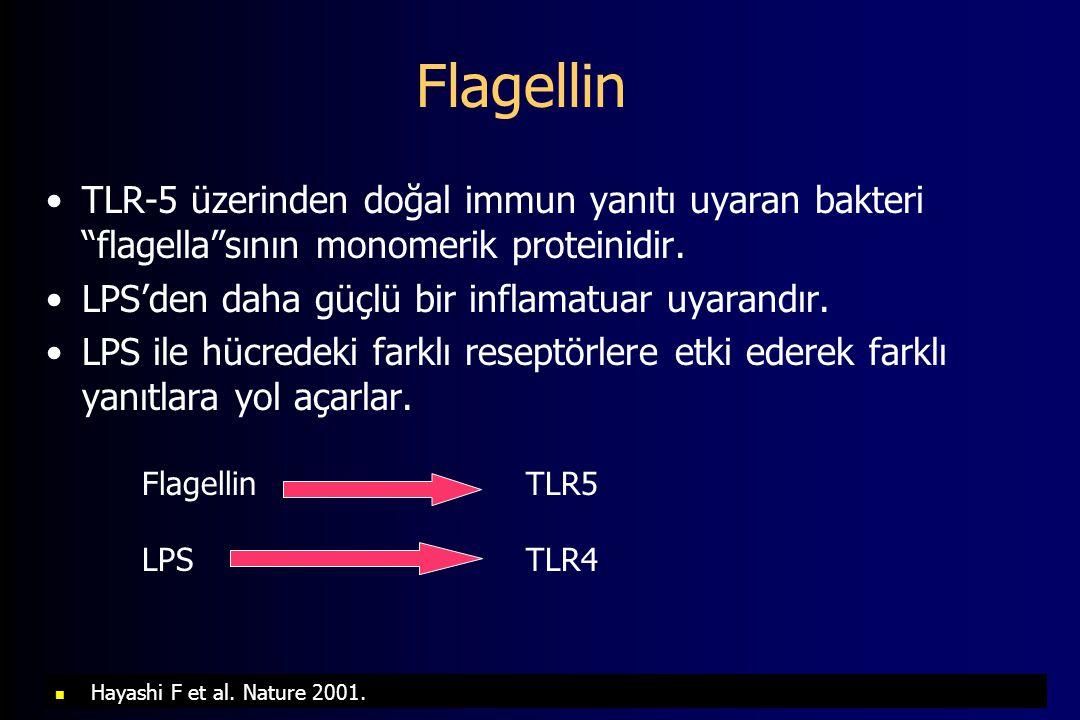 Flagellin TLR-5 üzerinden doğal immun yanıtı uyaran bakteri flagella sının monomerik proteinidir. LPS'den daha güçlü bir inflamatuar uyarandır.
