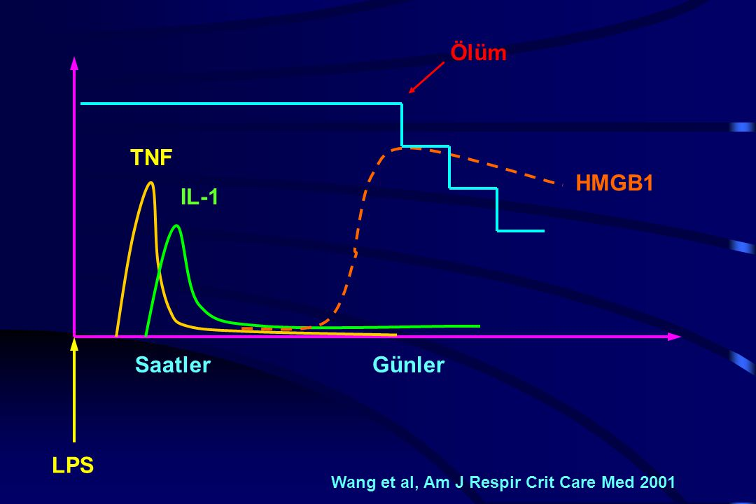 Ölüm TNF HMGB1 IL-1 Saatler Günler LPS