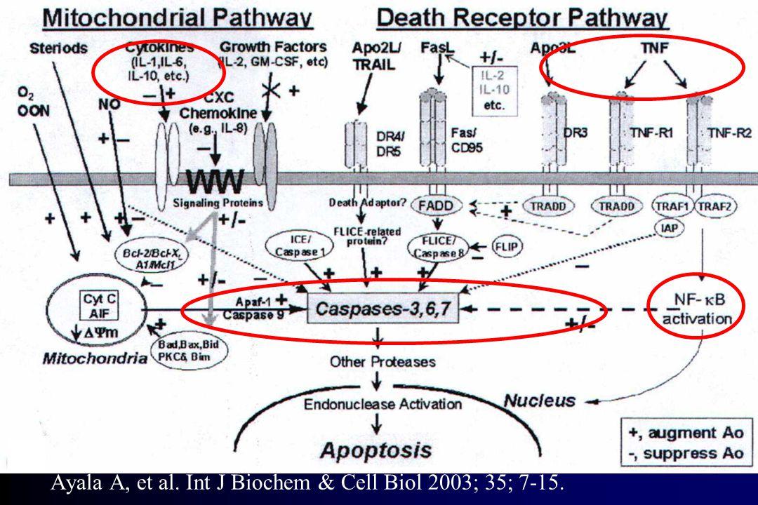 Ayala A, et al. Int J Biochem & Cell Biol 2003; 35; 7-15.