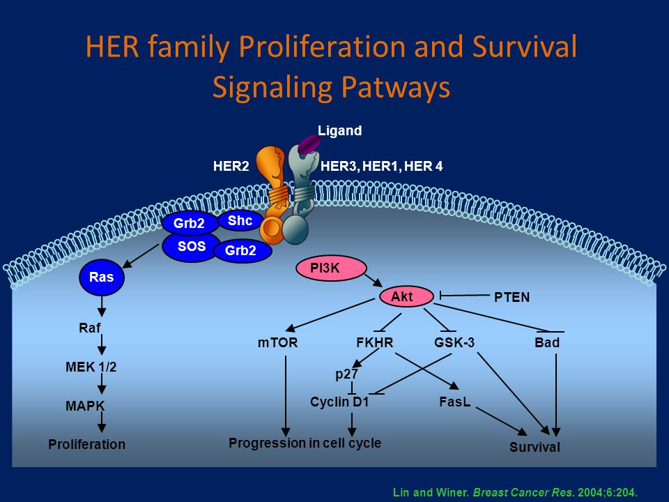 HER family Proliferation and Survival Signaling Patways
