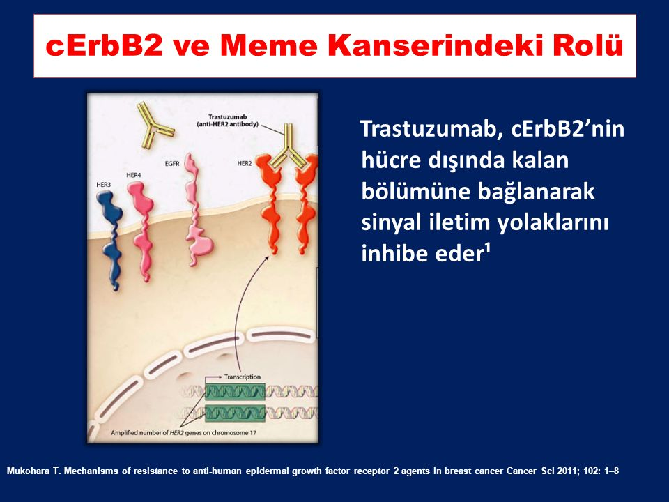 cErbB2 ve Meme Kanserindeki Rolü
