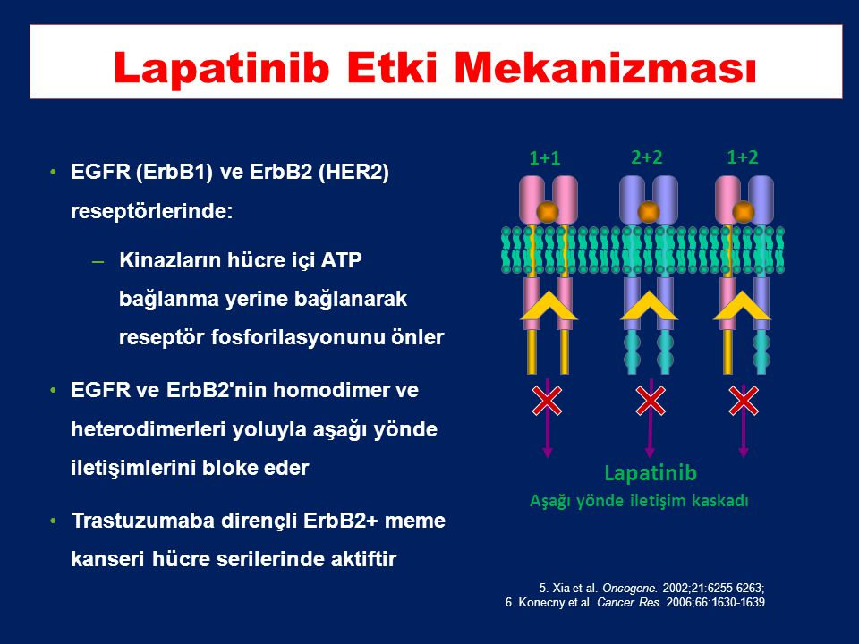 Lapatinib Etki Mekanizması
