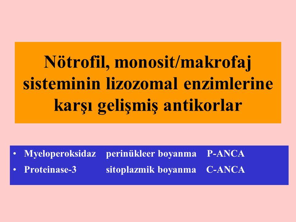 Nötrofil, monosit/makrofaj sisteminin lizozomal enzimlerine karşı gelişmiş antikorlar