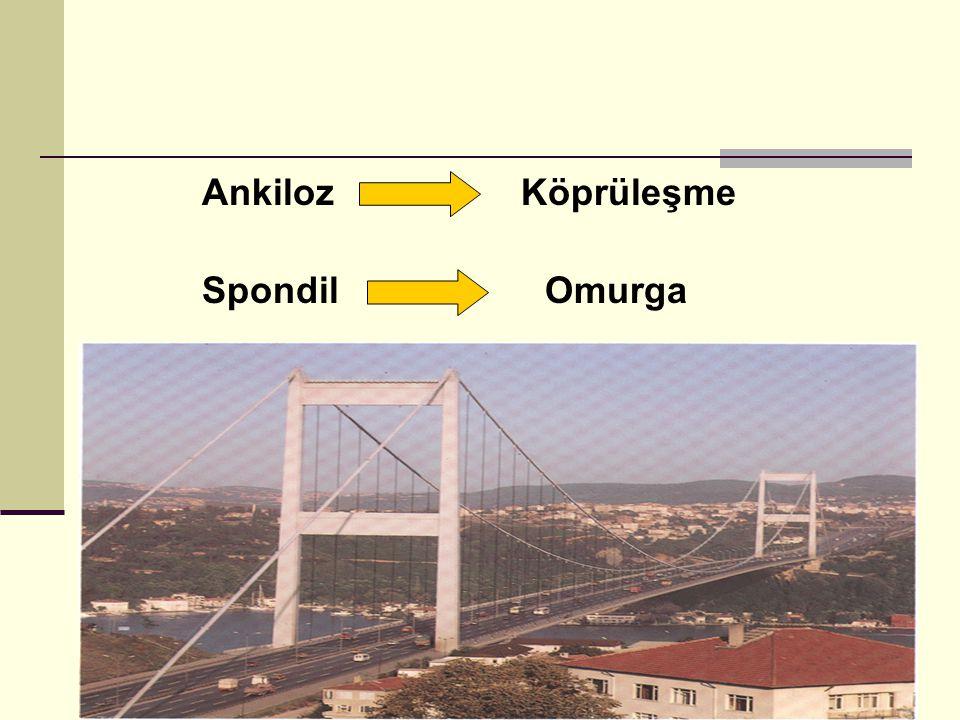 Ankiloz Köprüleşme Spondil Omurga