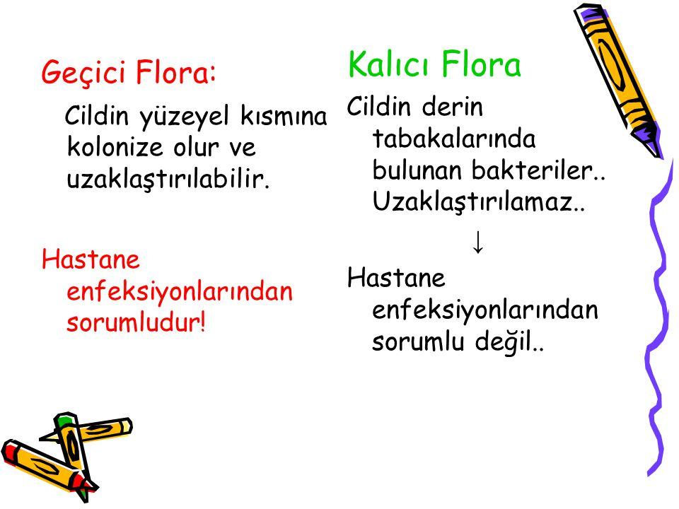 Kalıcı Flora Geçici Flora: