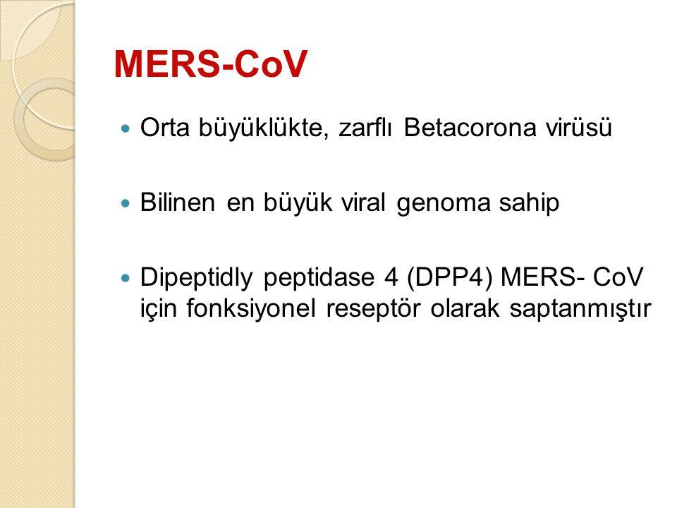 MERS-CoV Orta büyüklükte, zarflı Betacorona virüsü