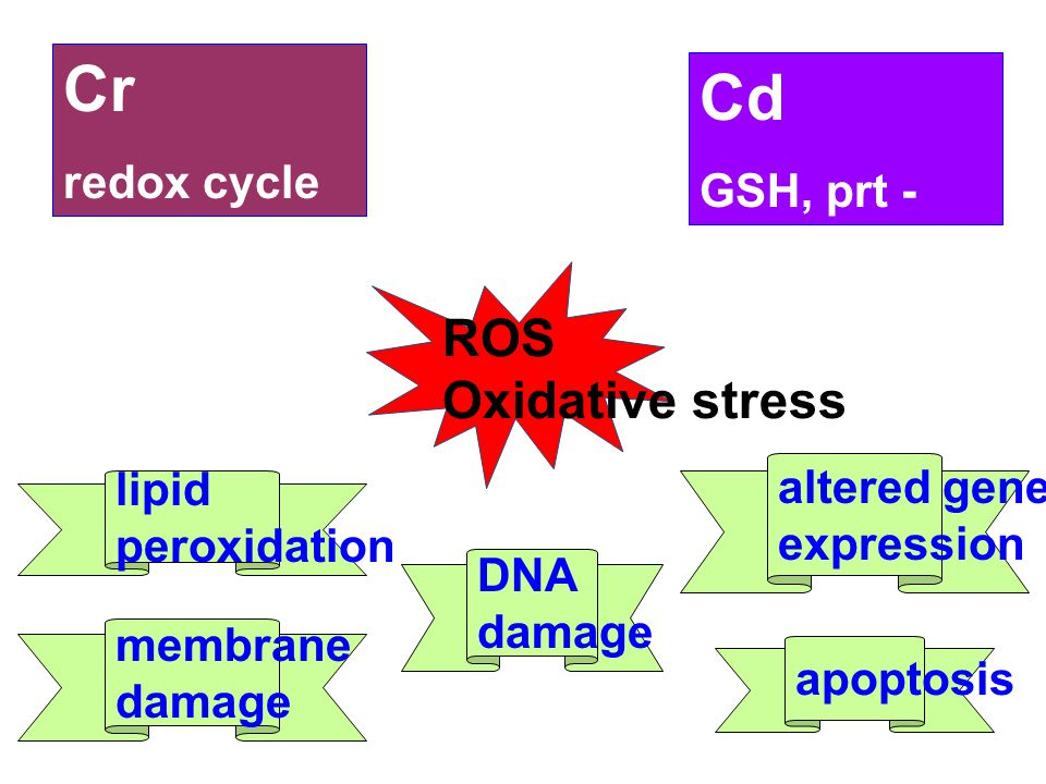 Cr Cd ROS Oxidative stress redox cycle GSH, prt - SH altered gene