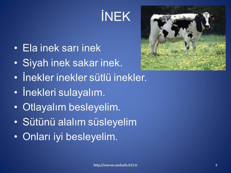 İNEK Ela inek sarı inek Siyah inek sakar inek.