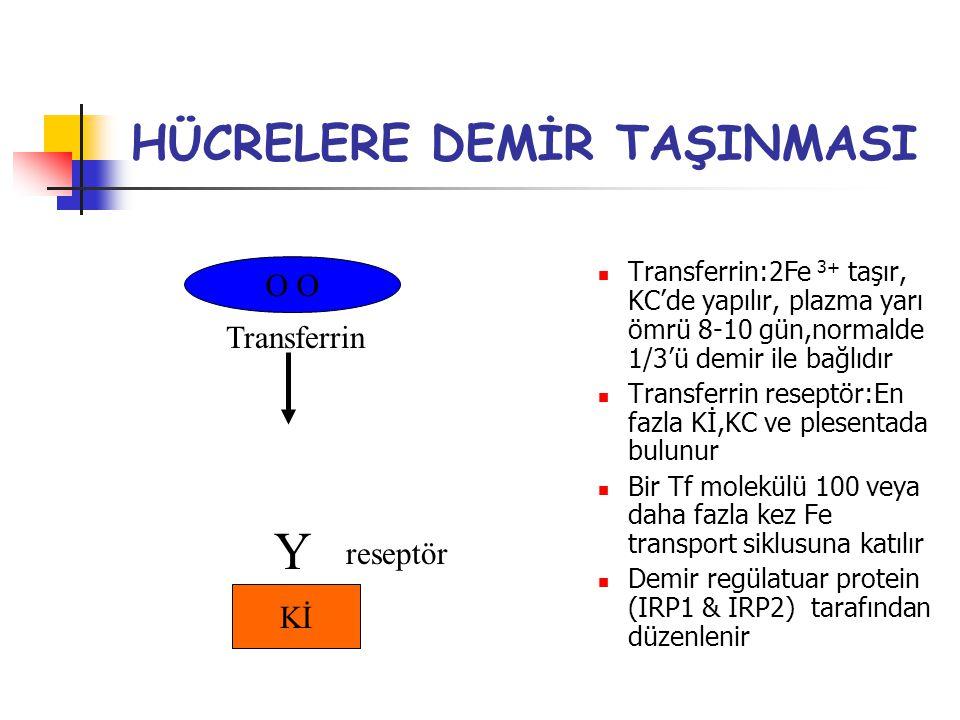 HÜCRELERE DEMİR TAŞINMASI