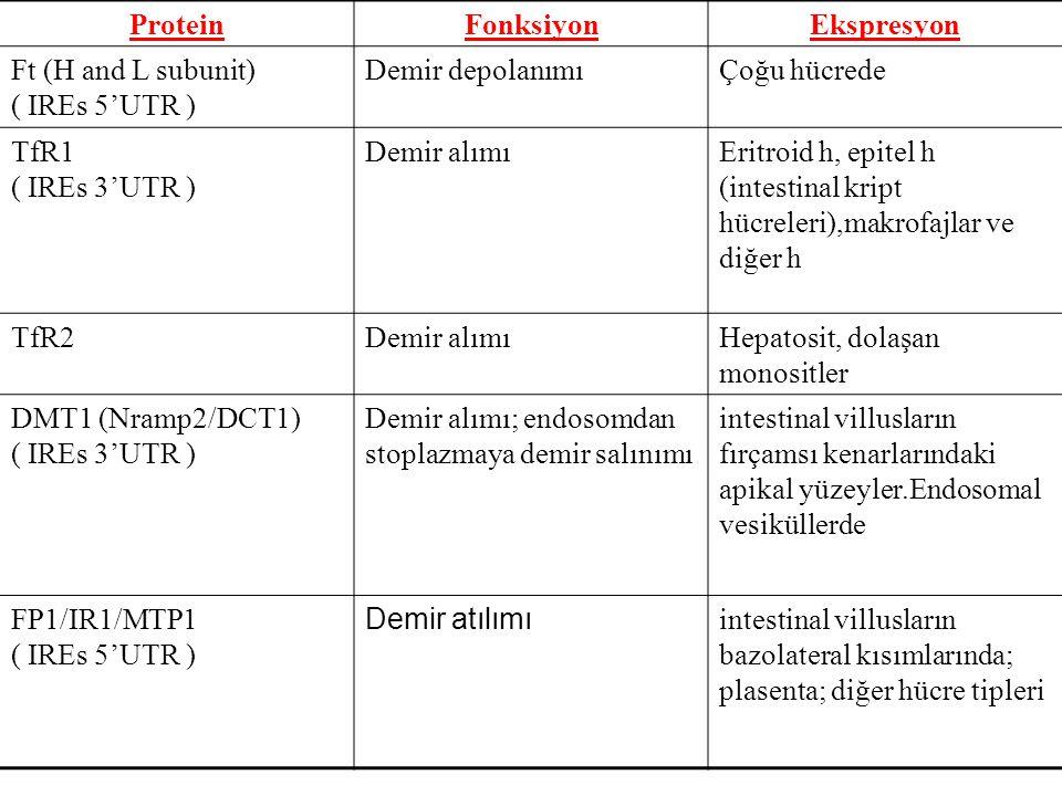 Protein Fonksiyon Ekspresyon
