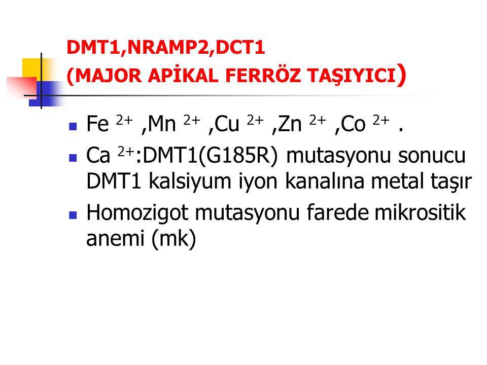 DMT1,NRAMP2,DCT1 (MAJOR APİKAL FERRÖZ TAŞIYICI)