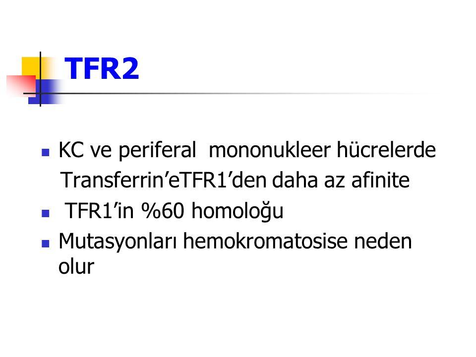 TFR2 KC ve periferal mononukleer hücrelerde
