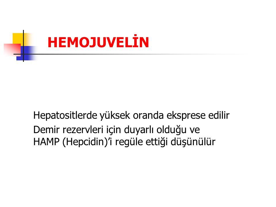 HEMOJUVELİN Hepatositlerde yüksek oranda eksprese edilir