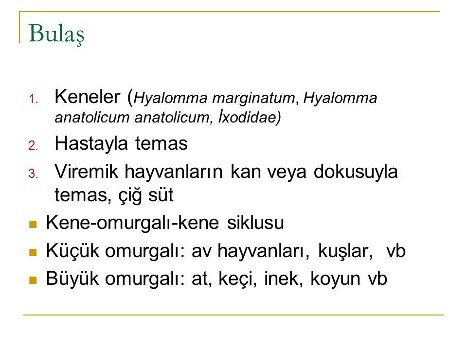 Bulaş Keneler (Hyalomma marginatum, Hyalomma anatolicum anatolicum, İxodidae) Hastayla temas. Viremik hayvanların kan veya dokusuyla temas, çiğ süt.