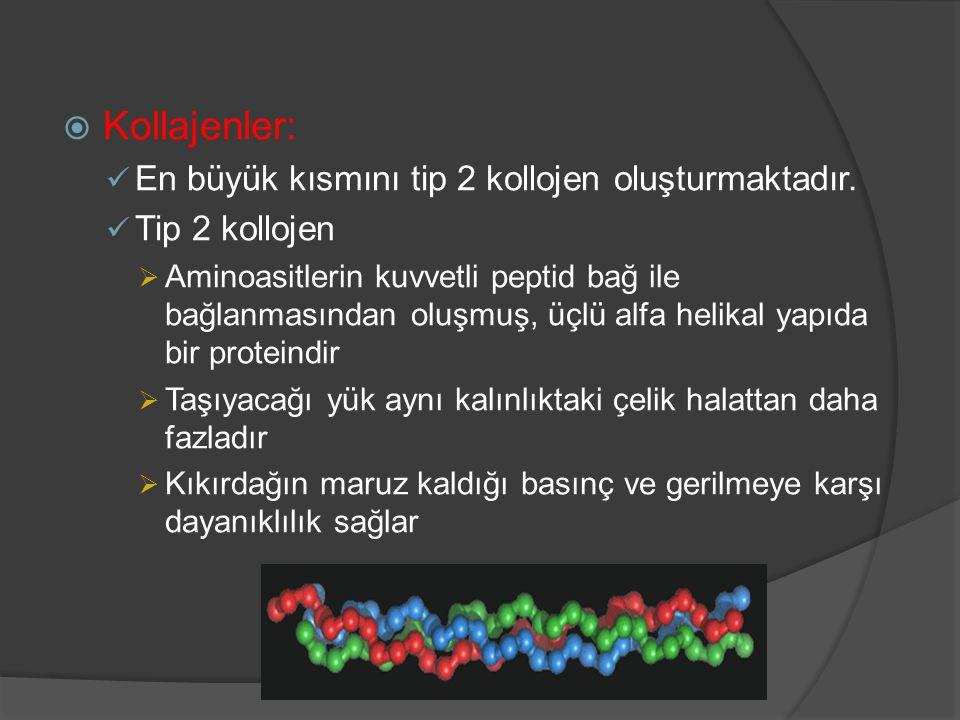 Kollajenler: En büyük kısmını tip 2 kollojen oluşturmaktadır.