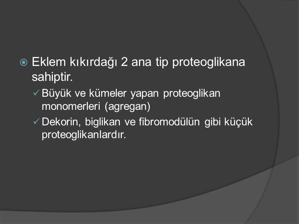Eklem kıkırdağı 2 ana tip proteoglikana sahiptir.